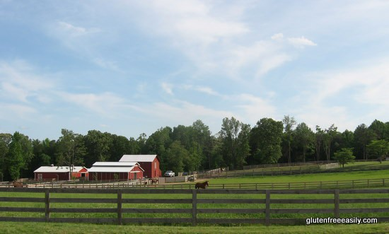 horses-route-205-rev-blog