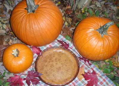 Pumpkin Pie TS-2