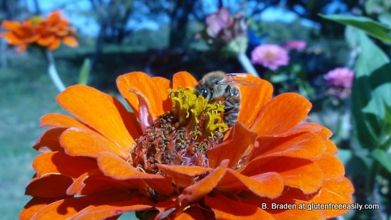 Bo Honeybee1
