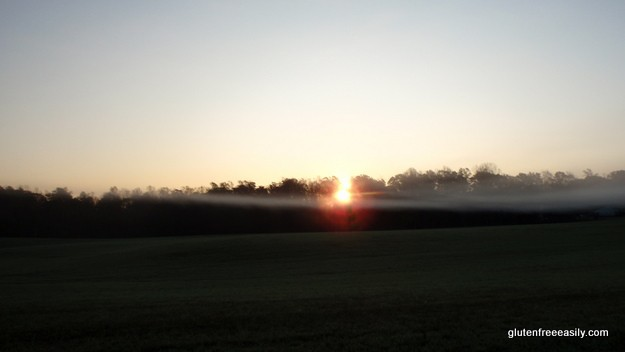 Micamine Morning 3