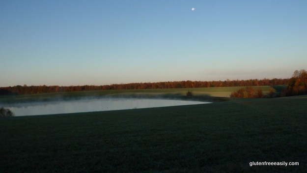 Micamine Morning 5