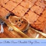 Pumpkin Butter Pecan Chocolate Chip Bars (Grain Free)