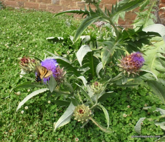 artichoke flowers, butterfly, Stratford Hall, Robert E. Lee's birthplace
