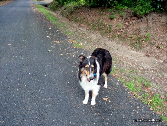 Sonny, walking, movement, self-care retreat