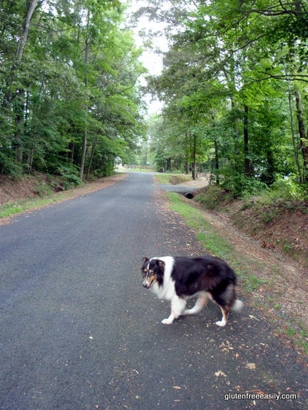 Self care with movement. Moving with a purpose. Sonny waiting for me on our morning walk as I pick up sticks en route.