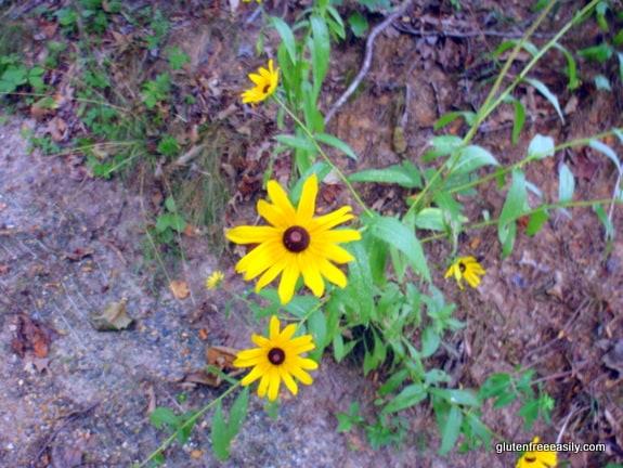 Wildflowers, walking, movement, self-care retreat, brown-eyed Susans, black-eyed Susans