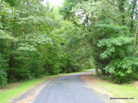 walking, movement, self-care retreat, woodland scene