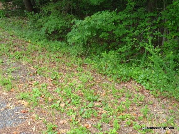 ferns, walking, movement, self-care retreat