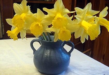 Daffodils Gluten Free Easily