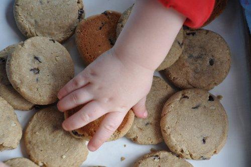 "Gluten-Free Nut-Free Vegan ""Toddler"" Sunflower Snack Cookies from Nourishing Meals"