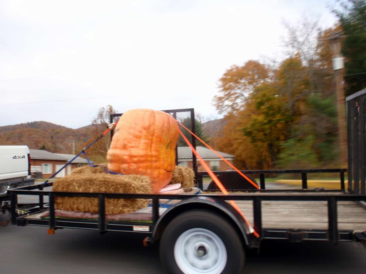 Largest Jack-O-Lantern Seen on Halloween Day
