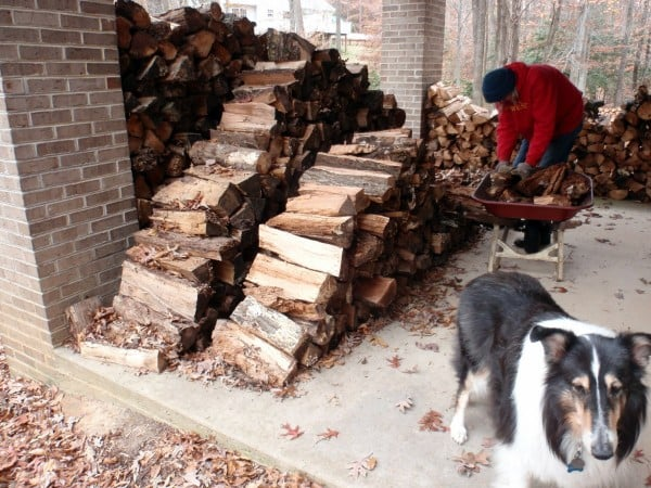 """Mr. GFE is the """"ant""""in The Ant and the Grasshopper when it comes to firewood for winter!"""