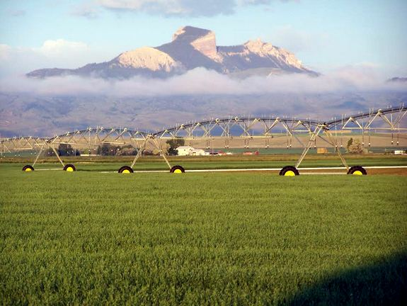 GF Harvest Oat Fields with Mountains