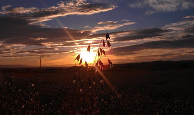 GF Harvest Oats Inspection at Sunrise