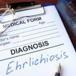 Ehrlichiosis Took Me Down Hard … What You Need to Know