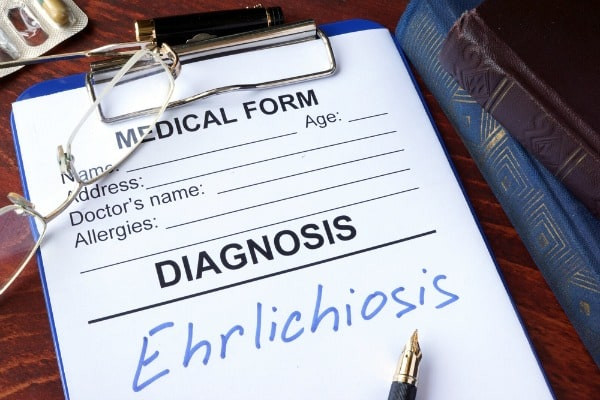Ehrlichiosis took me down. Almost all the way down. Learn the symptoms and seek immediate medical help if you experience them. On a day-to-day basis, shower after outdoor activities during tick season. [from GlutenFreeEasily.com]