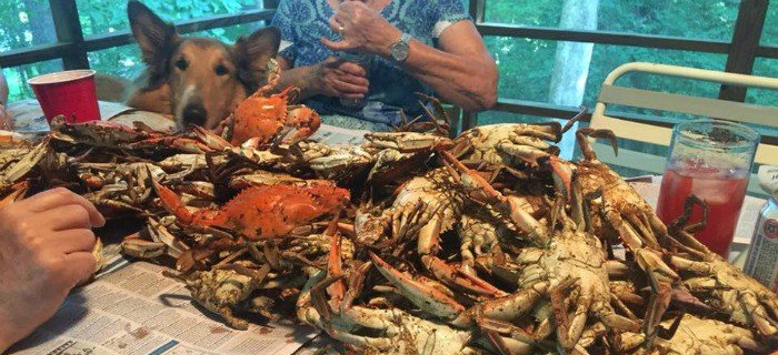 Dozer eyeing the steamed crabs at the family birthday party. [from GlutenFreeEasily.com]